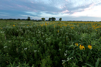 Late summer sunset over vast prairie meadow of wildflowers in Sp