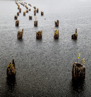 Pilings in driving rain. Plum Lake. WI