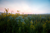 Morning mist over prairie wildflowers. Dupage County, IL.